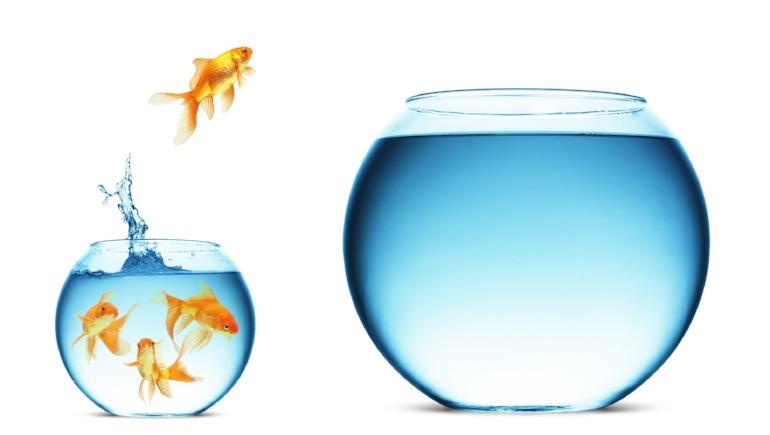 Fish Jumping - Capacity Planning.jpeg