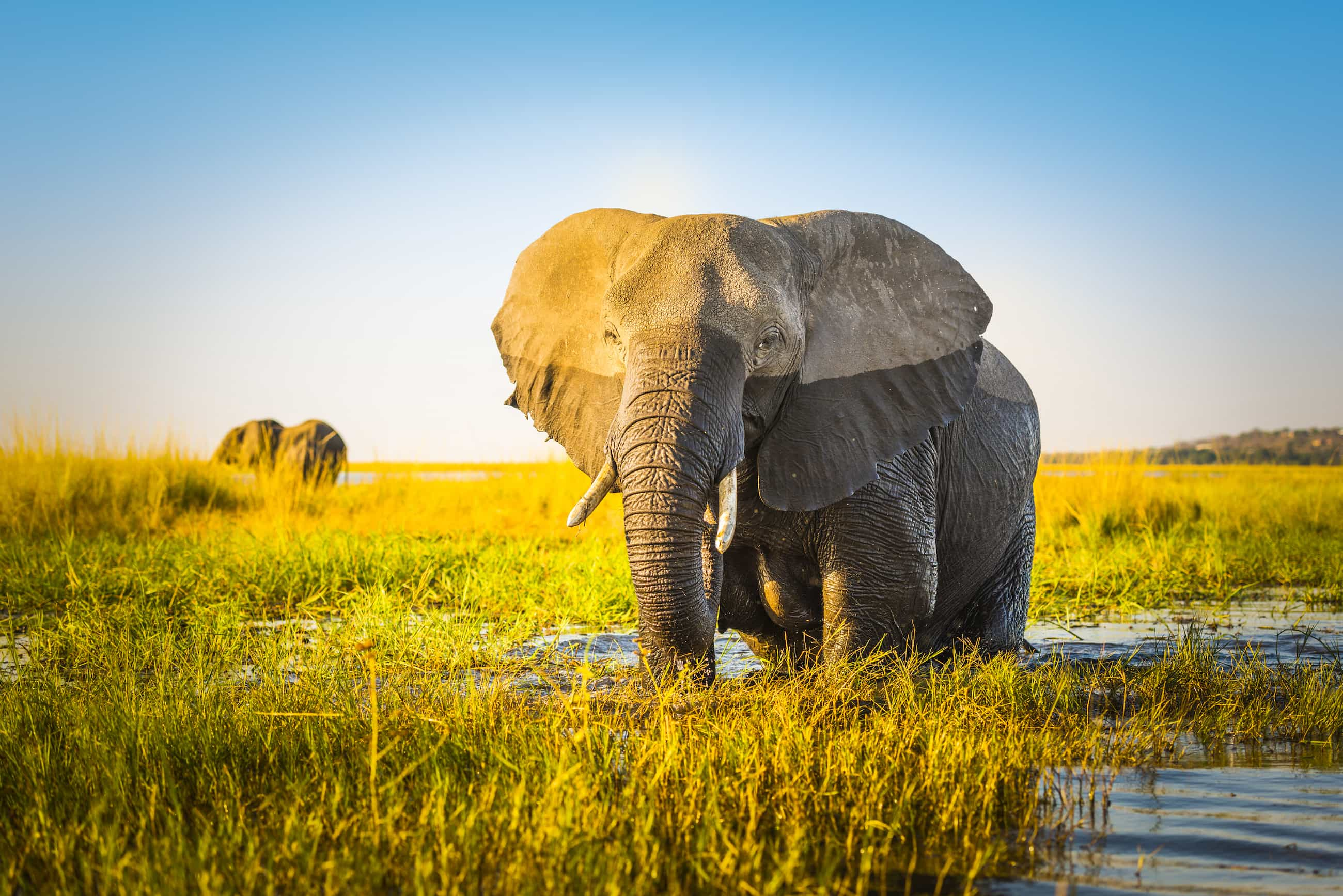 Effective Transformational Change Must Embrace The Entire Elephant — Not Just Its Part